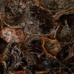 Black Petrified Wood